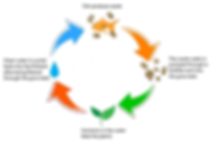 Aquaponic_cycle.png