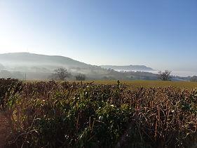 Bagwyllydiart Farm long view.JPG
