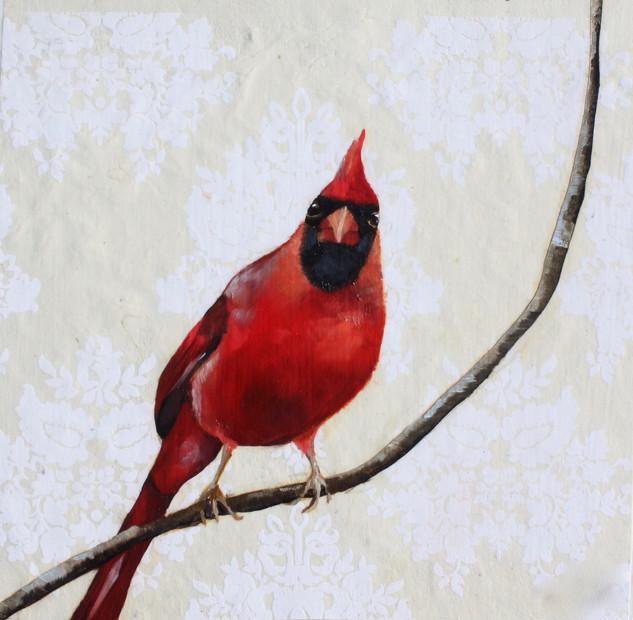 Cardinal #5