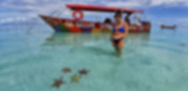 Starfish in san blas islands tour
