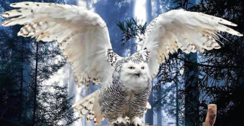 Белая Сова – знак судьбы
