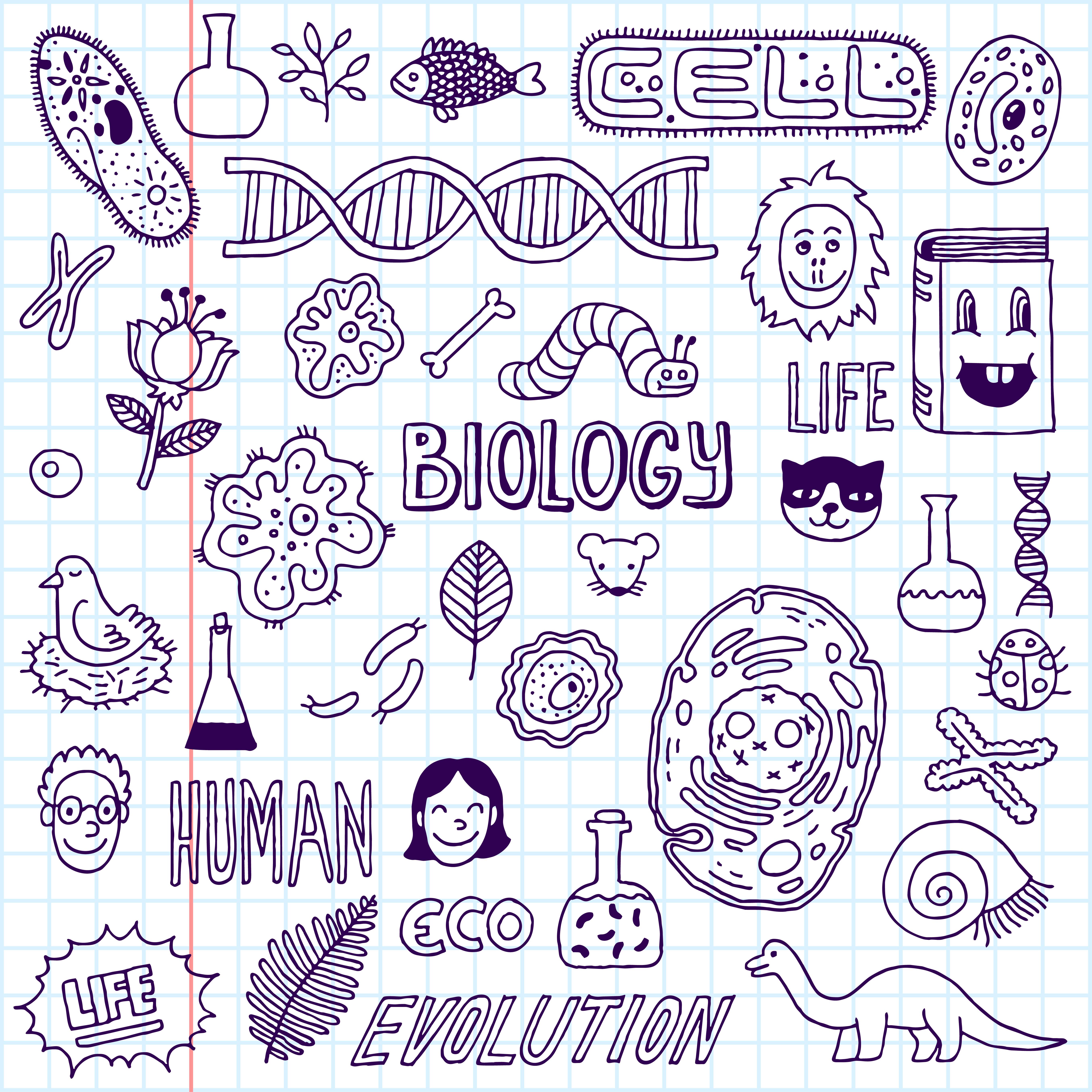 Biologydoodles
