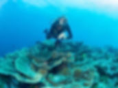 Site Author over Rose Coral - Wakatobi I