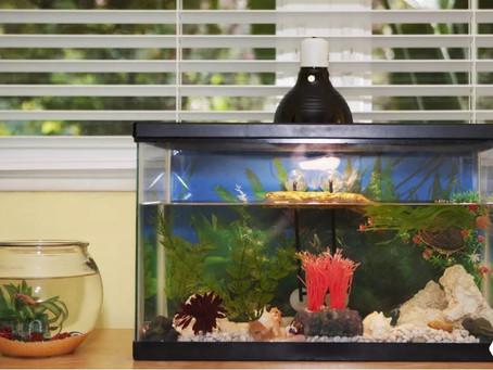 Converter um aquário de água doce em aquário de água salgada