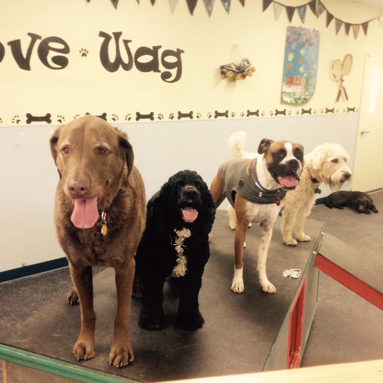 Canine Social Club