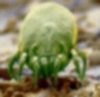 dust-mite-electron-microscope-spl.jpg