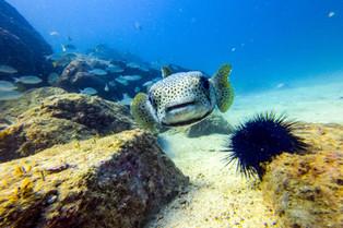 Diving in Fujairah © Katharina Sunk
