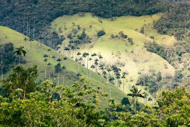 Valle de Cocora © Katharina Sunk