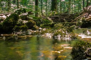 Wilderness area Dürrenstein © Katharina