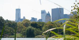 Central Park © Katharina Sunk