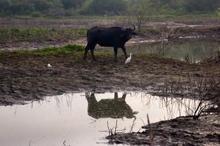 Udawalawa National Park © Katharina Sunk