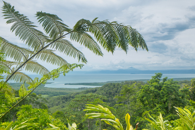 Daintree Rainforest © Katharina Sunk.jpg