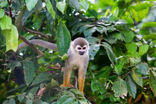 Colombian Amazon © Katharina Sunk