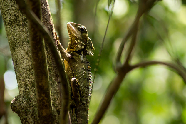 Daintree Rainforest © Katharina Sunk