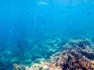 Ningaloo Reef © Katharina Sunk