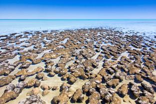 Hamelin Pool Marine Nature Reserve © Kat