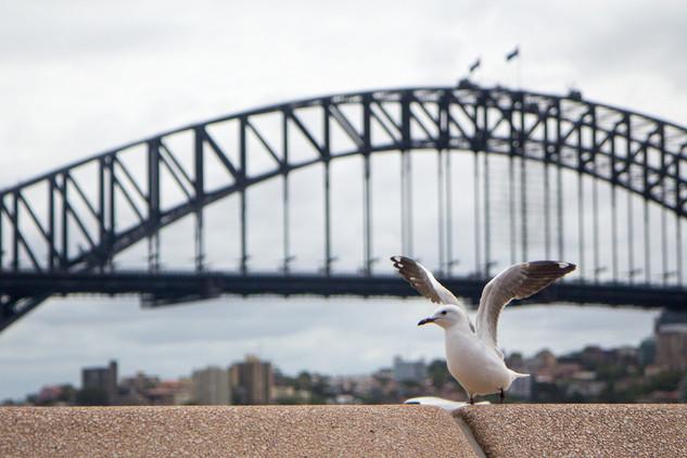 Sydney Harbour Bride © Katharina Sunk