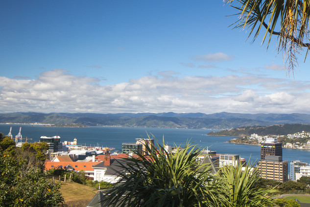 Wellington © Katharina Sunk