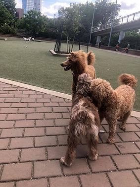 Dog Park Pic.jpg