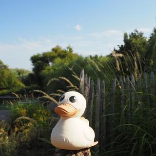 Kawan duck toy sitting on a piece of wood