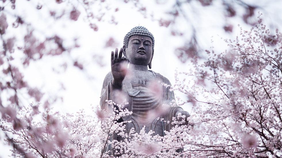 Cherry-blossoms-buddha-statue_3840x2160.