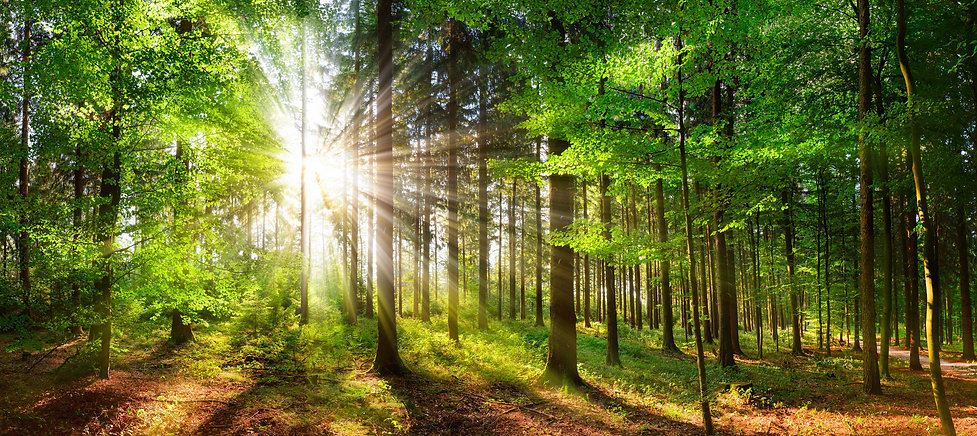 ForestAdobeStock_255174366_edited.jpg