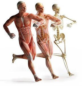corps-humain-anatomie-formation-aubagne-