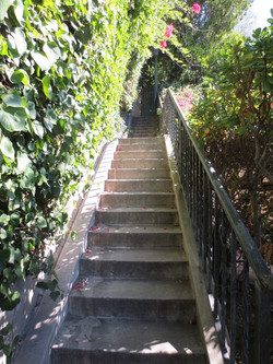Whitley Steps 1