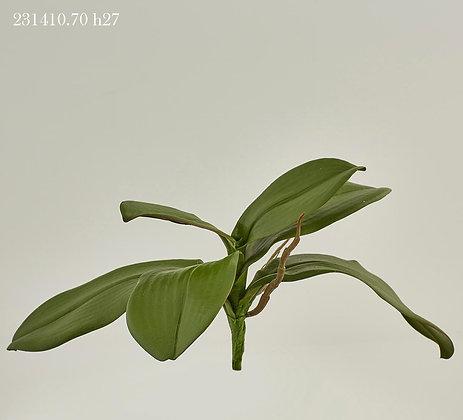 FOGLIA ORCHIDEA
