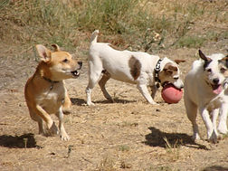 RK and friends play ball at Doggie Daycare / Hounds To Horses