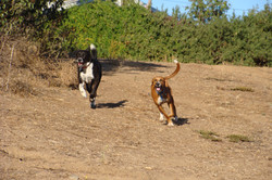 Big Dog Yard #3