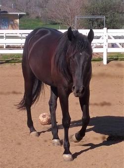 Horse Retirement Boarding