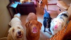 Social Dog Boarding