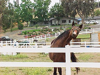 Horse Retirement Boarding