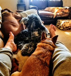 Doggy Nappin'