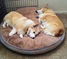 Linus & Lucy love to nap at Hounds To Horses