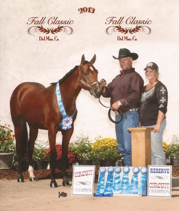 AQHA Circuit Champ - Connor