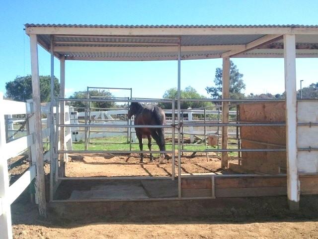 Horse Boarding - Retirement Ranch