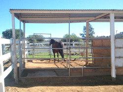 Horse Boarding - Retirement Ranch