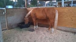 Horse_Stalls