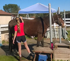 Royalty Care Horse Boarding