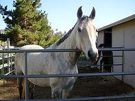 We Pet Sit Horses