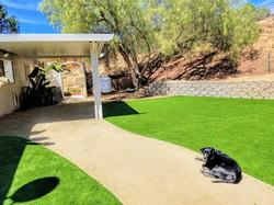 Main Dog Play Yard #1