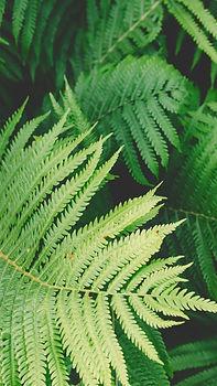 PlantParty Wallpaper