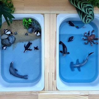 Penguin water play