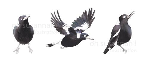 Magpie trio.jpg