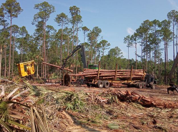 Haw Creek Log Loading.jpg