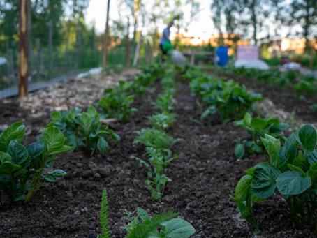 Uudistavaa viljelyä puutarhaan
