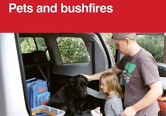 PIC - Pets and bushfires.png