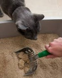 cleaning a cat litter box